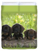 Wire-haired Dachshund Puppies Duvet Cover