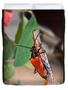 Wood Beetle Exploring Duvet Cover