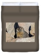 Yellow-bellied Marmot Poses For Pictures Duvet Cover