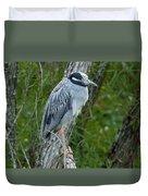Yellow-crowned Night Heron 4 Duvet Cover