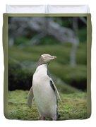 Yellow-eyed Penguin Albino Duvet Cover