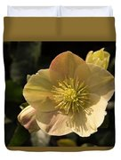 Yellow Helleborus Duvet Cover