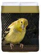Lesser Female Goldfinch Having Lunch Duvet Cover
