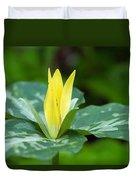 Yellow Trillium Flower Trillium Luteum Duvet Cover