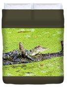 Young Alligator On A Log Duvet Cover