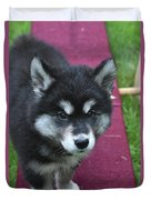 Young Alusky Puppy Standing On A Teeter Totter Duvet Cover