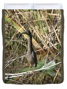 Young Green Heron  Duvet Cover