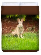 Young Healthy Wild Rabbit Eating Fresh Grass From Yard  Duvet Cover