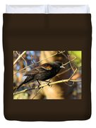 Young Male Red-winged Black Bird Duvet Cover