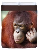 Young Orang Utan Looking Thoughtful Duvet Cover
