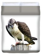 Young Osprey Duvet Cover