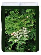 Young Seed Cones Of Lawson Cypress Duvet Cover