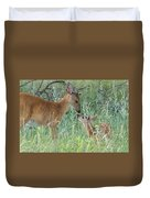 Young White-tailed Deer Say Hello Duvet Cover