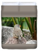 Zebra Finch Duvet Cover