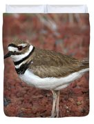 Killdeer Duvet Cover