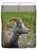 Stone's Sheep Duvet Cover