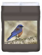 Western Bluebird Duvet Cover