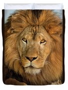 656250006 African Lion Panthera Leo Wildlife Rescue Duvet Cover by Dave Welling