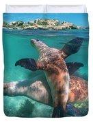 Australian Sea Lion Pair, Coral Coast Duvet Cover