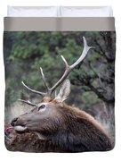 Bull Elk Grooms Himself Duvet Cover