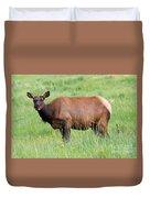 Cow Elk Grazing Duvet Cover