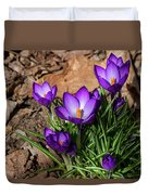 Crocus In Spring 2019 I Duvet Cover