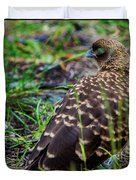 Falcon Chimango Caracara, Tierra Del Fuego National Park, Ushuaia, Argentina Duvet Cover