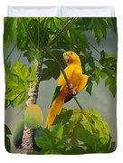 Golden Parakeet In Papaya Tree Duvet Cover