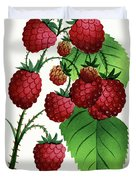 Hepstine Raspberries Hanging From A Branch Duvet Cover