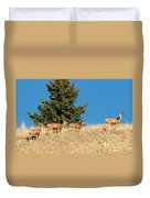 Herd Of Colorado Deer Duvet Cover