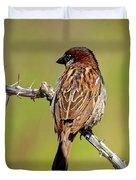 House Sparrow V1818 Duvet Cover