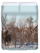 In Ninilchik A Moose Grazes In The Village In Late Winter Duvet Cover