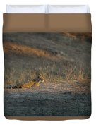 Lc12 Duvet Cover by Joshua Able's Wildlife