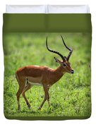 Male Impala Crossing Grassland With Tongue Out Duvet Cover