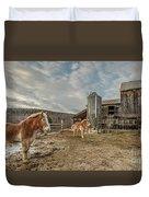 Morgan Horses Pomfret Vermont Duvet Cover