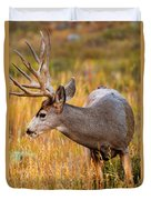 Mule Deer Buck In Rocky Mountain National Park Duvet Cover