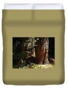 New Growth Redwoods Duvet Cover