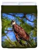 Osprey Lookin' At Ya Duvet Cover by Tom Claud