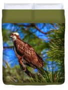 Osprey On Limb Duvet Cover by Tom Claud