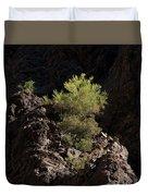 Palo Verde Spotlight-sq Duvet Cover