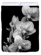 Phalaenopsis Orchids Black And White Duvet Cover