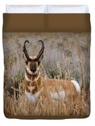 Pronghorn In The Sage Duvet Cover