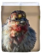 Rare Multicolored Male House Finch Duvet Cover