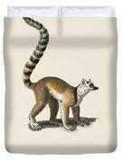 Ring-tailed Lemur  Lemur Catta  Illustrated By Charles Dessalines D' Orbigny  1806-1876  Duvet Cover
