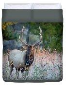 Rocky Mountain Wildlife Bull Elk Sunrise Duvet Cover by Nathan Bush