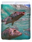 Snapper On Ningaloo Reef, Australia Duvet Cover