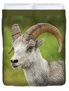 Stone's Sheep Ram Portrait Duvet Cover