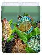 Three Discus Fish Duvet Cover
