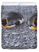 Two King Penguins By Alan M Hunt Duvet Cover