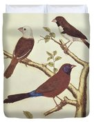 White Headed Munia, Double Coloured Seed Eater And Violet Eared Waxbill Duvet Cover